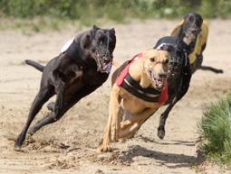 hvor hurtigt kan en hund løbe